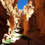Bryce Canyon. © Tanja Banner