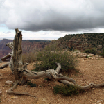 Grand Canyon. © Tanja Banner