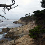 17-Mile-Drive in Monterey. © Tanja Banner
