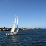 Segelboot vor Monterey. © Tanja Banner