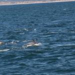 Das Meer wimmelt - Delfine überall! © Tanja Banner