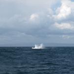 So sieht es aus, wenn man zu spät auf den Auslöser drückt: Wasser, aber kein Wal mehr. © Tanja Banner